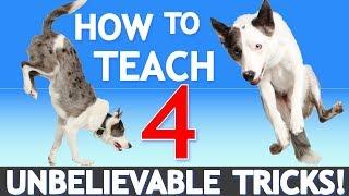 How to Teach 4 UNBELIEVABLE Tricks! Featuring America's Got Talent Star Sara Carson!