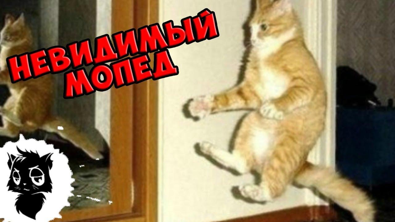 Сильные Приколы с Котами [Черный Кот] [Стихи про Всякую Хрень]