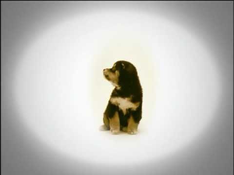 ジョンの純な恋物語PV.dogs only ver.