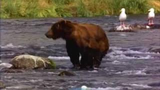 Bear fuck Brother