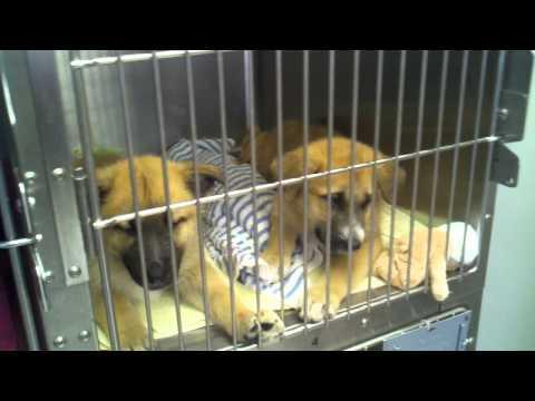 Its raining cute puppies at the SPCA!