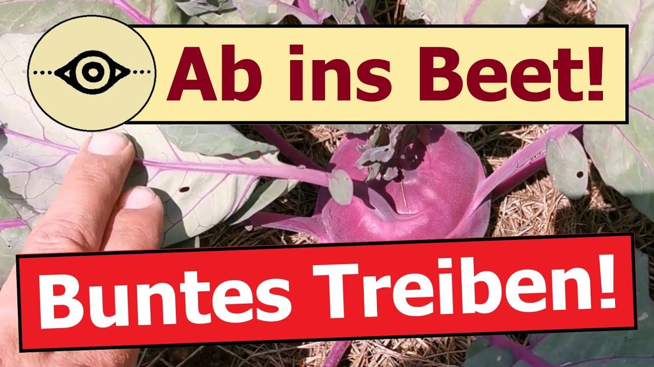 Ab ins Beet ❗ | 🌞🌱 Buntes Treiben - Gartenleben & Gartenfreude 🦋🌼 | 🎬 Folge 155