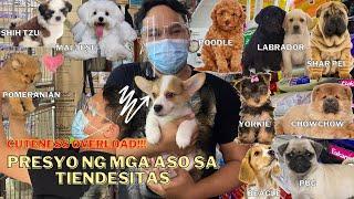 UPDATED PET PRICE LIST IN TIENDESITAS PET VILLAGE (MAY 2021) CUTENESS OVERLOAD!! ***MUST WATCH***