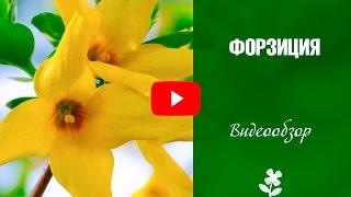 Садовый папоротник: видео-инструкция по выращиванию своими руками, особенности посадки, ухода, фото