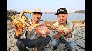 阿烽新买50个蟹笼,规模比去年扩大几倍,一次就抓到2斤多大膏蟹Afeng caught a kilogram crabs with 50 crab catching cages.