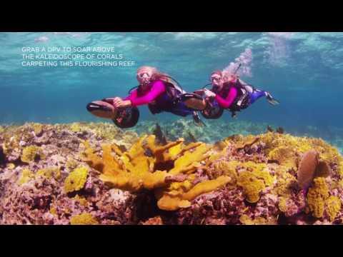 Dive Southwest Reef with Stuart Cove's Dive Bahamas