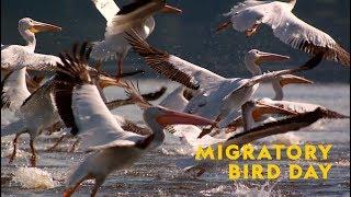 National Geographic World Migratory Bird Day