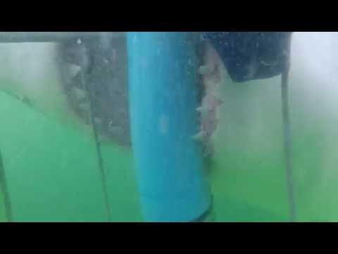 Best Shark Attack Video - gigantic Great White Shark in South Africa while Cage Diving