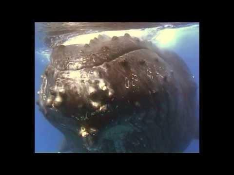 Whales of Comoros, Moidjio Chindini 2013