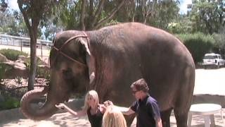Воды слонам - Главная Звезда