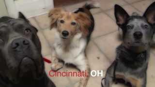 Picture Perfect K-9 Llc: Professional Dog Training Cincinnati, Ohio