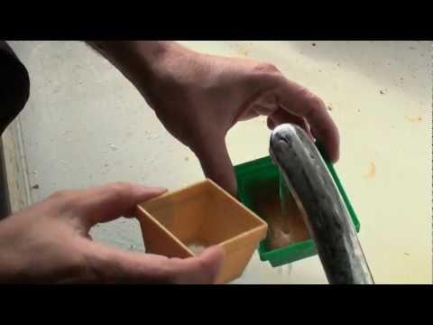 Artemia-Fütterung Von Jungen Diskusfischen