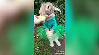 #5 Видео приколы с животными до слез 2019...