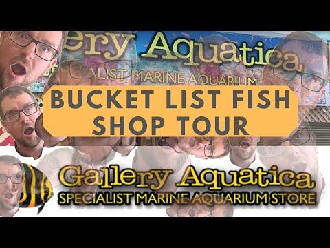 QLD LFS Crawl - Gallery Aquatica, Bucket List Fish Shop!