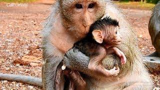 Milan monkey gives Mona baby a warm hug / Adorable Milan and her cute baby Mona