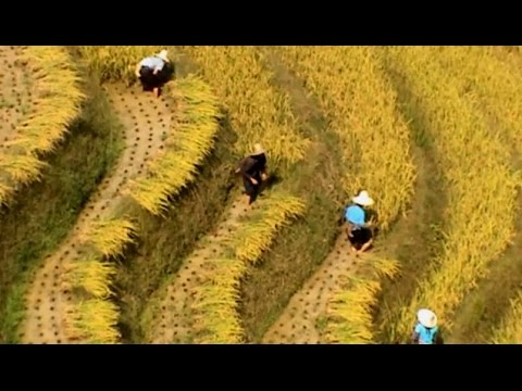 Dazhai (大寨) Fall Harvest - 2005 (China Works Series)