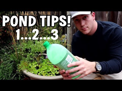 MY BEST POND TIPS: No Mosquitoes, Temp Control And More