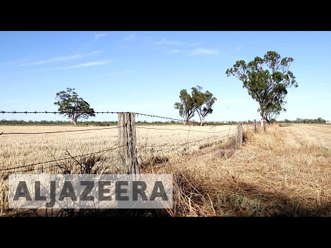 Environmentalists combat land clearing in Australia