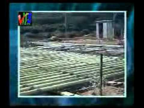 Spi 1 & Japan Algae Spirulina  Nature s Perfect Energy Food