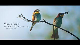 BeeEater