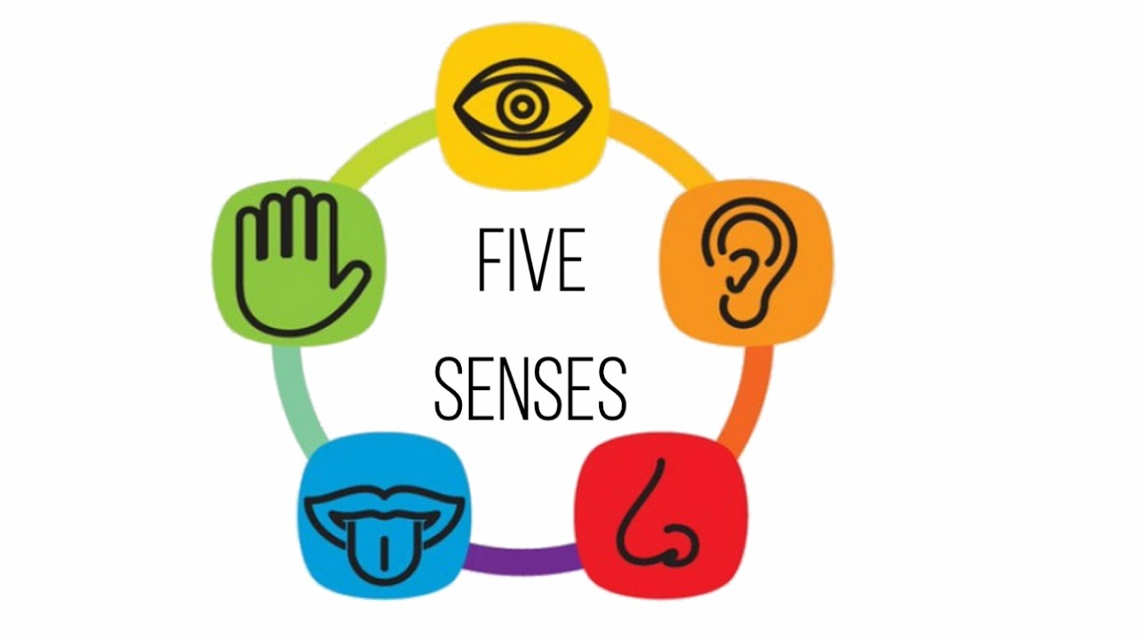 Five senses for kids Audio visual Flash card! - YouTube