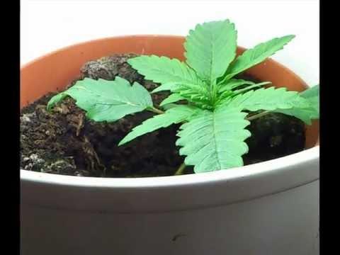 my grow 2011-2012 Teil 1/2