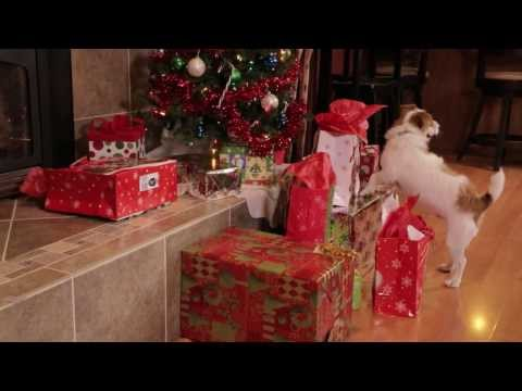A Jack Russell Christmas | drsophiayin.com