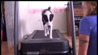 Treadmill Train Your Dog