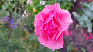 Потрясающий сад после дождя : Domovenok