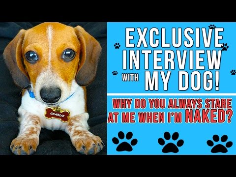 An Interview With MY DOG!