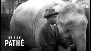 A Real White Elephant (1926)