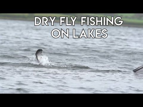 Dry Fly Fishing On Lakes | How To