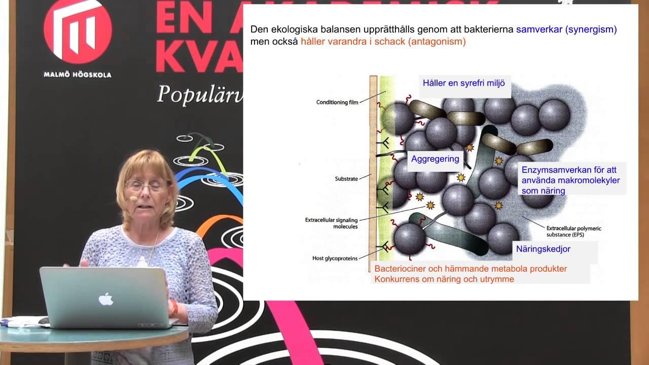 Gunnel Svensäter: Bakterier på gott och ont