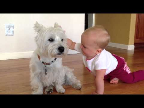 Westie and Baby