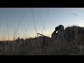 Wicked Close Range Early Morning Coyote Kill! Howling For Predators and Using Crow Decoys!