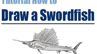 Tutorial How to draw a SAILFISH step by step // wie man einen Schwertfisch zeichnet