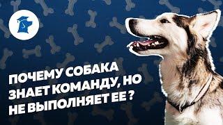 Почему собака знает команду, но не выполняет ее?