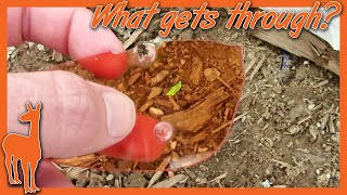 Bulletproof Safety Glasses? 9mm, .22LR, & Air Rifle vs. Browning ACE Lenses | The Social Regressive