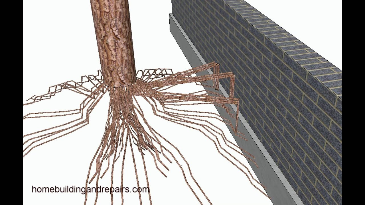 Tree Roots Can Move Small Retaining Walls Landscaping