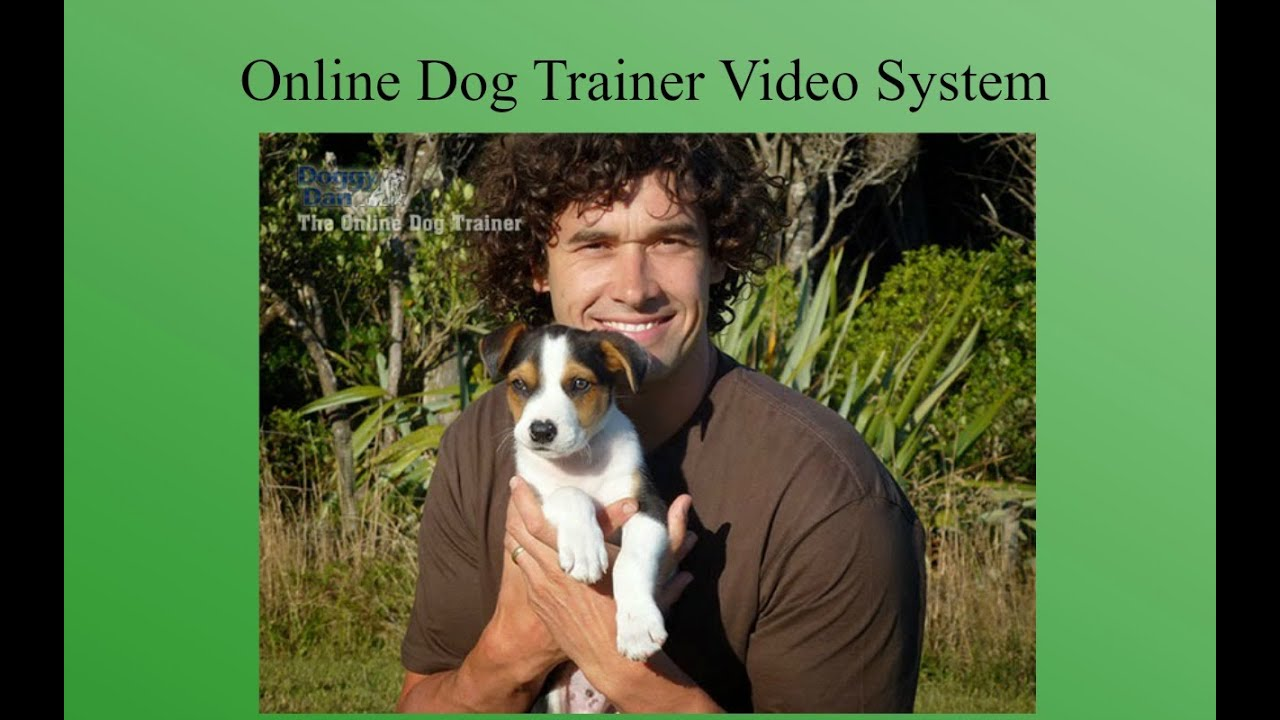 how to potty train a puppy video