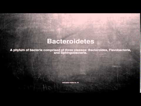 Medical vocabulary: What does Bacteroidetes mean