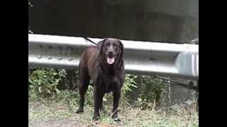 Gypsy Brown The Prettiest girl in town video