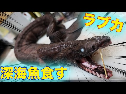 【深海魚】サメの仲間「ラブカ」を捌いて食べてみた