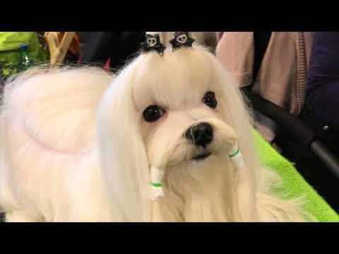 FeHoVa Winter Dog Show 2018.