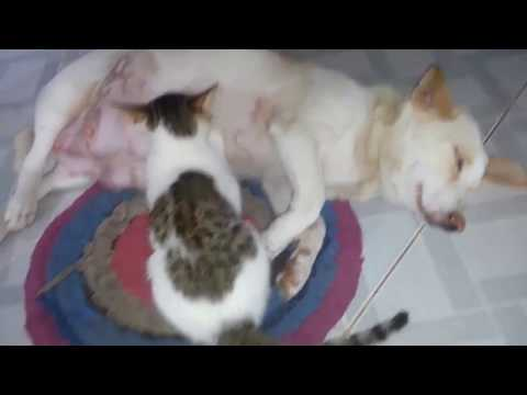 BEST MOM DOG AND HER CAT SON - FUNNY PETS MOMENT