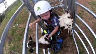 3 year old Bull Rider in the making