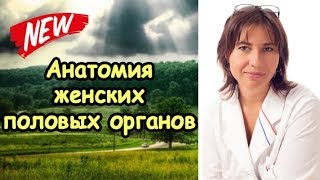 Анатомия женских половых органов(http://doctormakarova.ru/ А также для тех, кто любит подсматривать..., 2014-12-17T16:31:27.000Z)