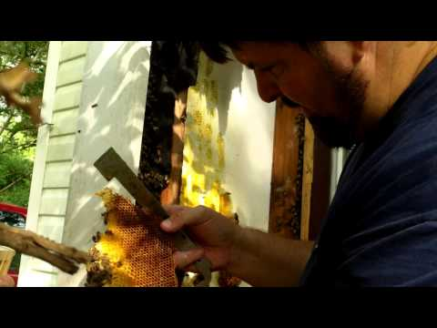 Apartment Bee Hive Removal