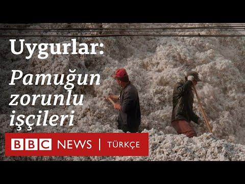 Çin'in pamuk tarlalarında çalışmaya zorladığı Uygurlar