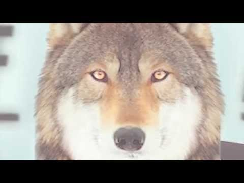 Wolf of Wallstreet 2 - The Wolf Anthem - Ill Skillz - Dj Mosaken - M.O.D